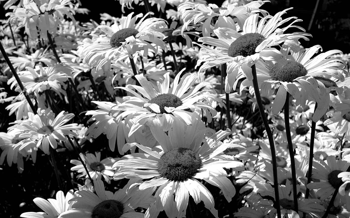 The Path of Beauty - Black and White